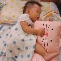 【Momo媽】- Milo&Gabby動物好朋友造型枕♥防蟎 抗菌